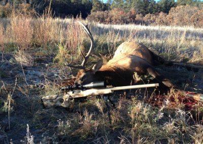Hunt - Sewell Elk