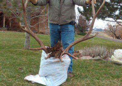 Hunt - rays 6x6 elk